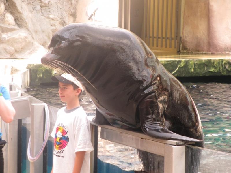 CGI Kid Sea Lion